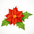 Holly flower isolated on white background — Imagen vectorial