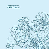 Background of spring crocuses outline — Stok Vektör