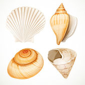 Set realistic seashells isolated on white background — Stock Vector