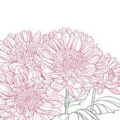 Line pink chrysanthemum background — Stockvector