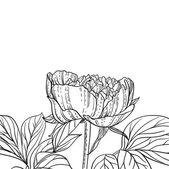Peonies line art background — Vecteur
