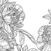 Peonies black line art background — Vecteur