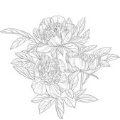 Peonies line art isolated on white background — Stock Vector