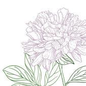 Peonies pink and green line art — Vecteur
