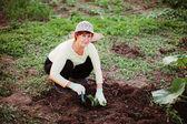 Gardener. — Stock Photo