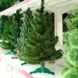 Sale of bare Christmas tree - Stock Photo