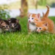 Four little kittens in garden - Stock Photo