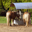 Horses at feeder — Stock Photo