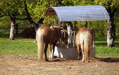 Horses at feeder — Stock Photo