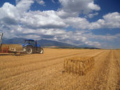 Wheat harvest on Liptov, Slovakia — Stock Photo
