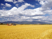 Wheat harvest in Slovakia — Stock Photo