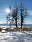 Trees and the sun in High Tatras — Stock Photo