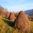 Stock Photo: Three haystacks prepared on meadow