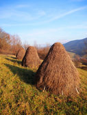 Three haystacks prepared on meadow — Stock Photo
