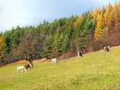 Horses grazing in autumn field — Стоковое фото