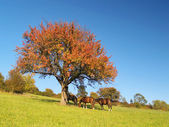 Horses under tree at late evening — Stockfoto