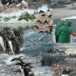 Montage - Antarctica — Stock Photo