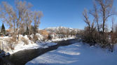 Panorama, Yampa River and cottonwoods in winter — Stock Photo
