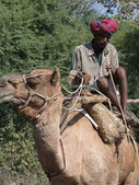 Camel driver leads his camel down the highway — Stock Photo