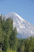 Forest and the southwest side of Mt. Rainier, and its glaciers — Stockfoto
