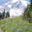 Glaciers on Mount Rainier — Stock Photo #13438081