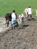 Indian farmer plowing with bullocks — Photo