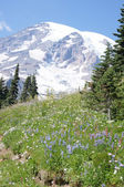 Glaciers on Mount Rainier — Stock Photo