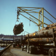 Stock Photo: Crane unloading logging trucks