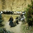Peruvian Indian women herding sheep — Stock Photo