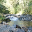 Stock Photo: Forest stream and river rocks
