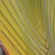 Detail, interlaced branches of a fan palm - Stock Photo