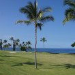 Coconut palms on golf course fairways — Stock Photo