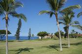 Coconut palms on golf course fairways — Stock Photo