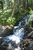 コニファー フォレスト内の滝 — ストック写真