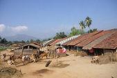 Casas y ganado — Foto de Stock