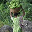 Woman in green sari carries green bananas - Stock Photo