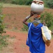Bonda tribal woman carries moonshine — Stock Photo