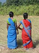 Mujeres indias en campo cosecha de semilla de sésamo — Foto de Stock
