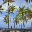 Coconut palm trees - Foto de Stock