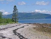 Low tide near Southwest Harbor — Stock Photo