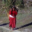 Stock Photo: Nepali womcarrying forage back to her village