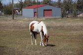 Bruine en witte paard grazen — Stockfoto