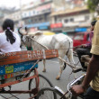 Rickshaws and bullock carts slow the traffic — Stock Photo