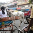 Stock Photo: Rickshaws and bullock carts slow the traffic