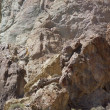Detail, tectonic warping of volcanic rhyolite rocks — Stock Photo