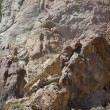 Stock Photo: Detail, tectonic warping of volcanic rhyolite rocks