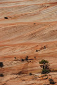 Detail, cross current layers of red sandstone — Stock Photo