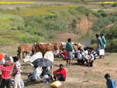 Local farmers sell their cattle at the weekly market — Stock Photo
