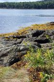 Gras, seetang und steine am strand — Stockfoto