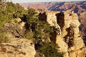 Turistas mirando por el cañón — Foto de Stock